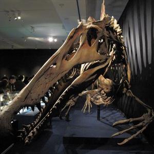 【旅】恐竜博2016 - スピノサウルス - «大阪文化館・天保山»:大阪府大阪市 -2017/1/9 -